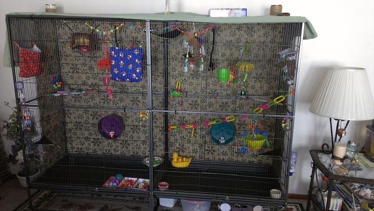Glidergossip Cage Sellers On Ebay