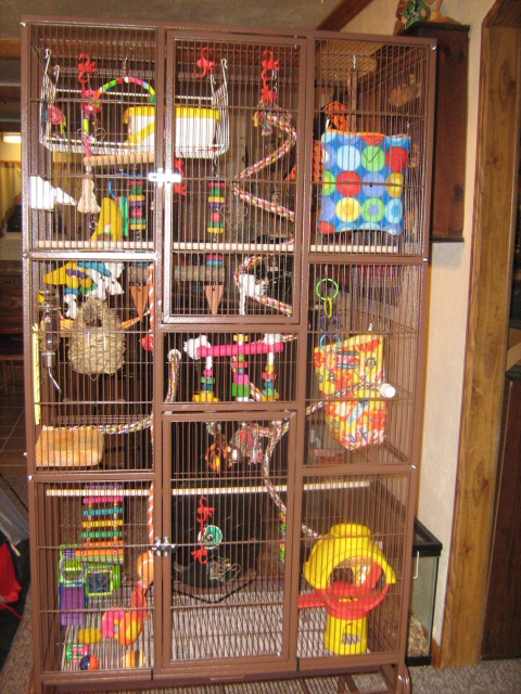 this is my boys cage lucas and cosmo