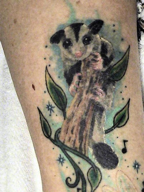 Sugarglider.com - Gliderpedia - Tattoo